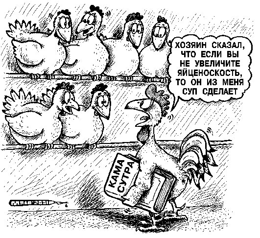 Сколько стоят Ваши Яйца? - Дискуссии на общие темы - Disput.Az Forum